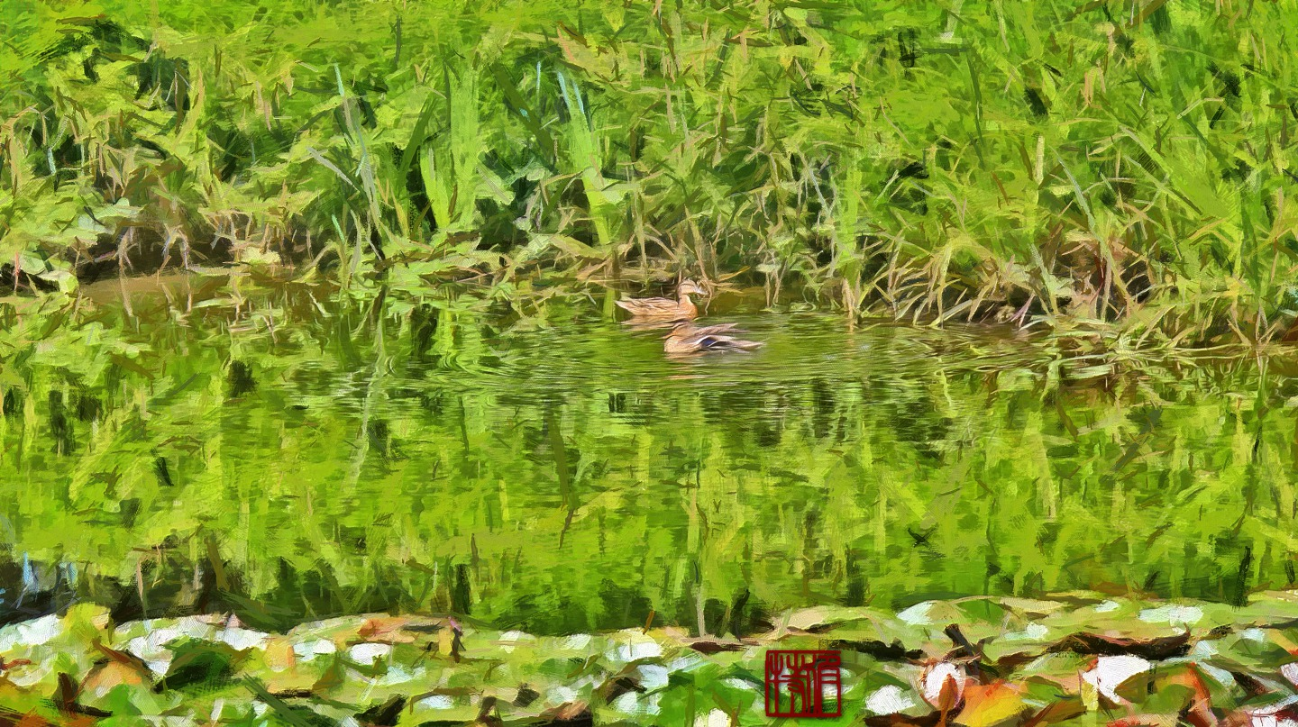 Ducks and Pond_Umido.jpg