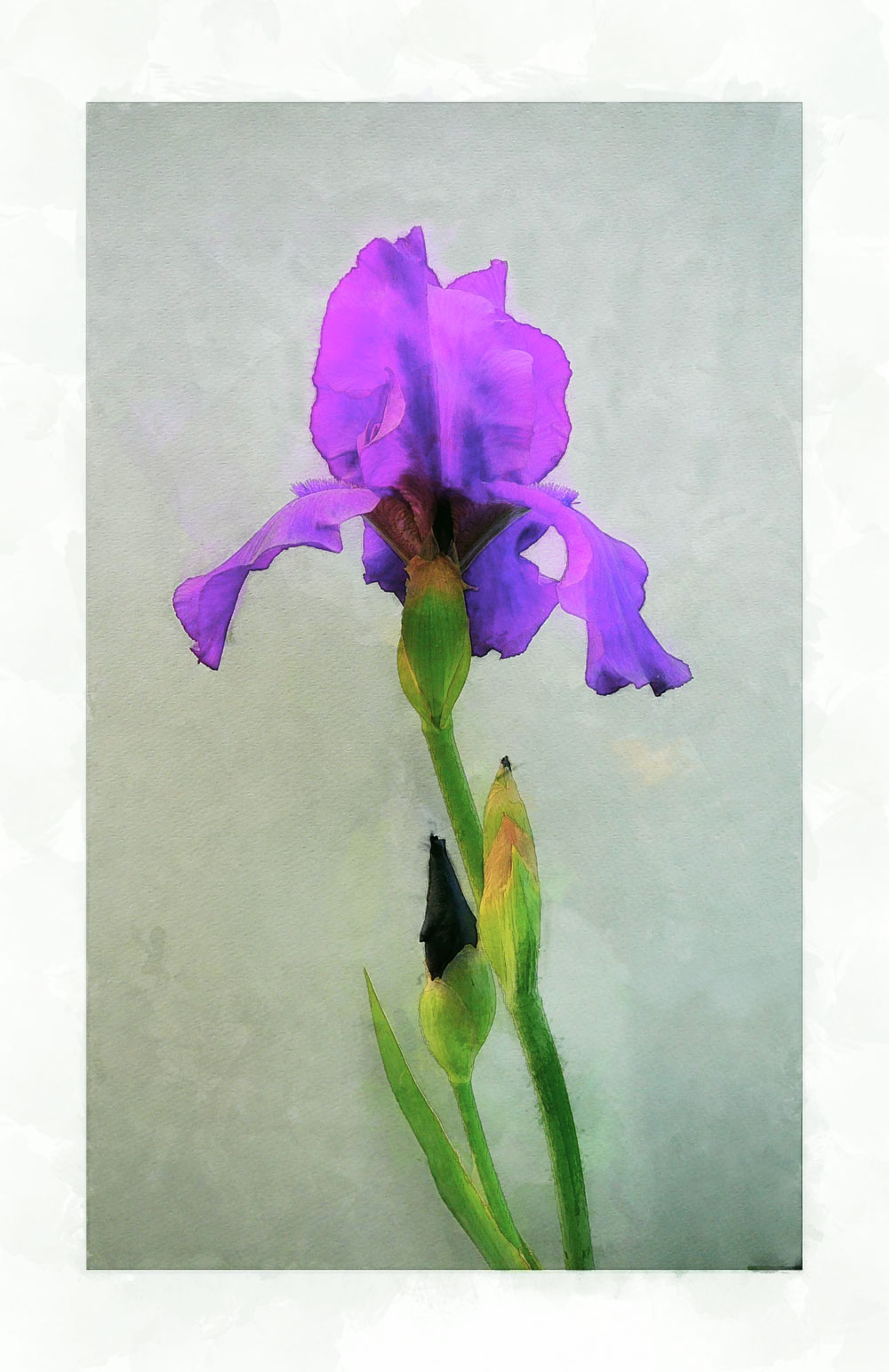 watercolor-iris1_DAP_Dreamy.jpg