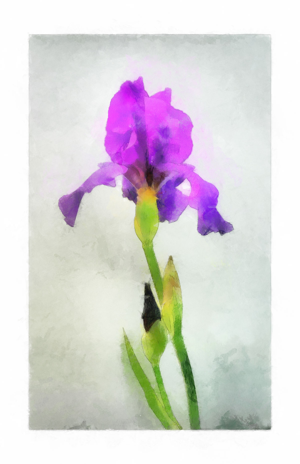 watercolor-iris_DAP_Realism.jpg