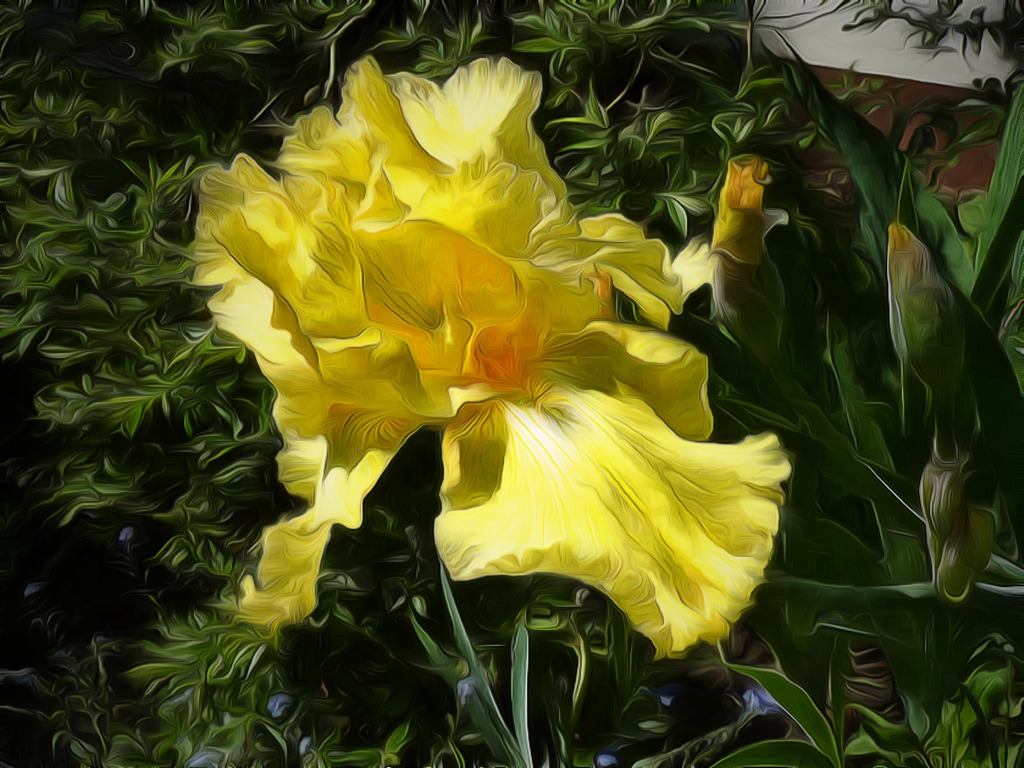 Yellow_Iris_by sunshine_rawfirsttry.jpg