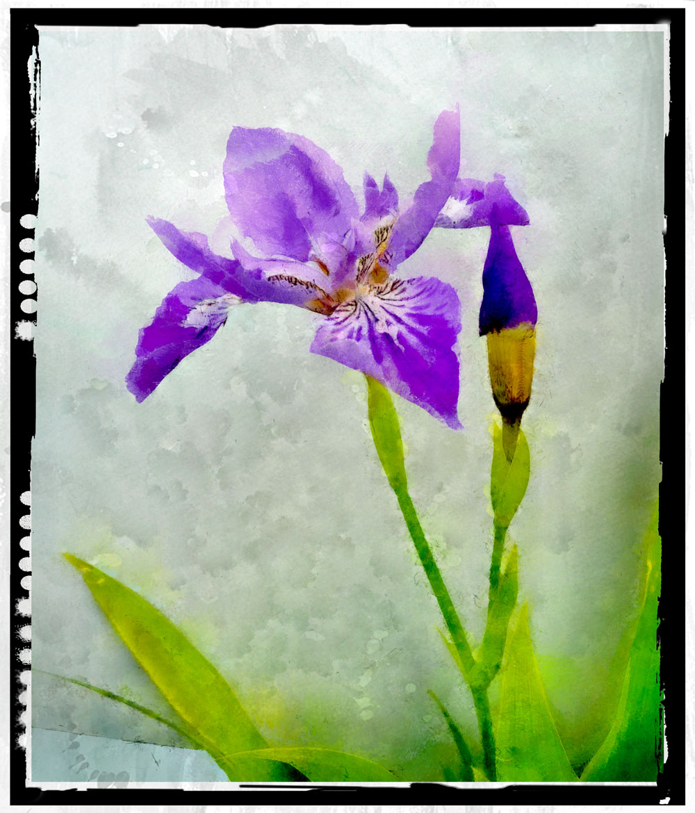 roof-iris12_DAP_Watercolor-.jpg