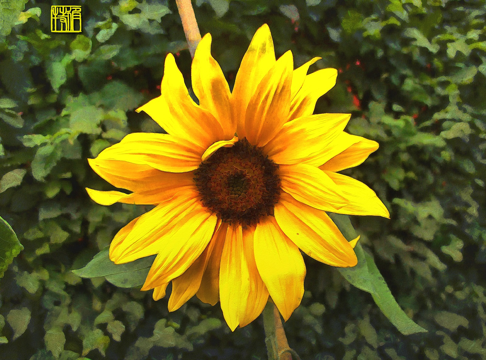 Sunflower June__Stellato__v6.jpg
